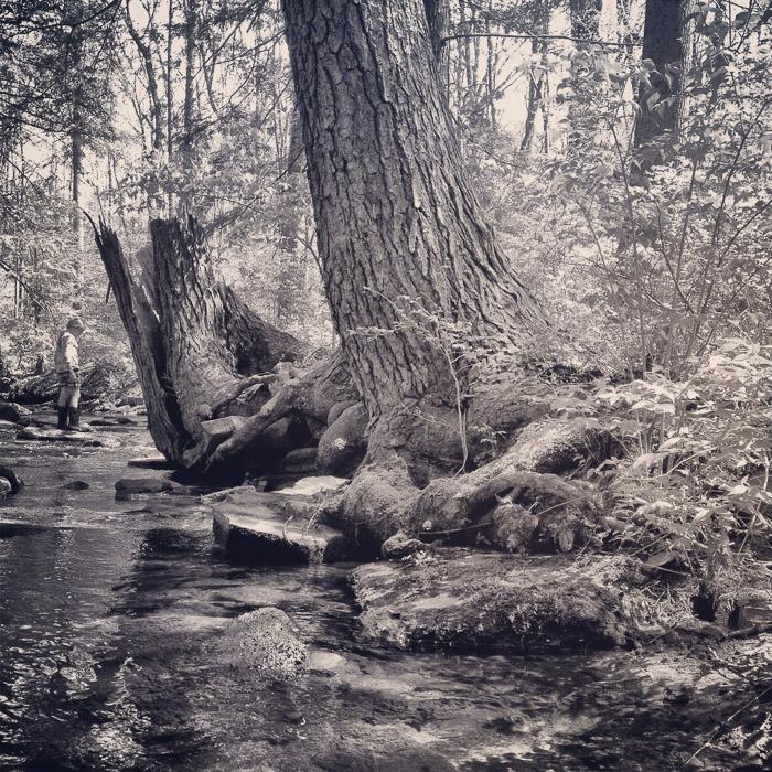 creek snapshot